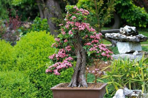 Japanischer Garten Für Zuhause by O Hanami F 252 R Zuhause Ideen Zum Japanischen Garten