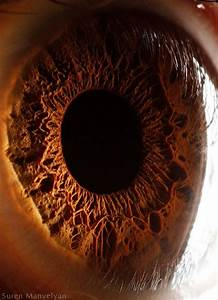 Windows To The Soul  Eyeball Closeups