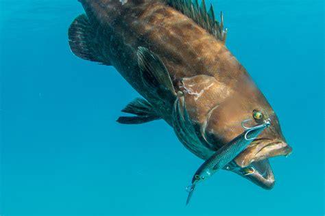trolling plugs fishing lipped