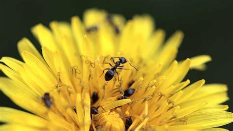Ameisen Bekämpfen Im Garten  Natürlich Mit Hausmitteln