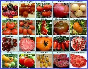 Zimmerpflanzen Alte Sorten : die besten 25 tomatensamen alte sorten ideen auf ~ Michelbontemps.com Haus und Dekorationen