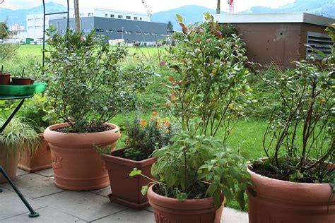 Heidelbeere Im Garten Pflanzen by Heidelbeeren Im Topf Pflanzen Topf Heidelbeere