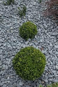 Bäume Für Steingarten : bilder steingarten anlegen gartengestaltungsideen steingarten anlegen mit passender bepflanzung ~ Sanjose-hotels-ca.com Haus und Dekorationen