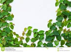 the green creeper plant on the wall royalty free stock photo image 21795055