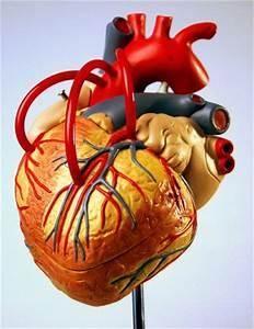 Natuurlijke behandeling hartfalen, oorzaak hartfalen