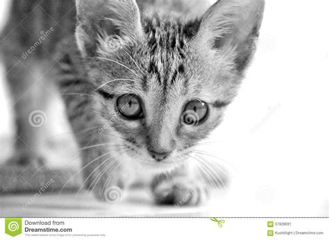 Furtive cat stock image. Image of movement, motion, young ...
