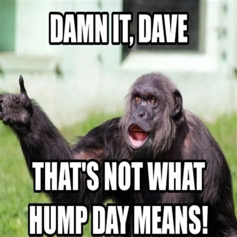 Hump Day Meme Best 25 Hump Day Meme Ideas On Hump Day