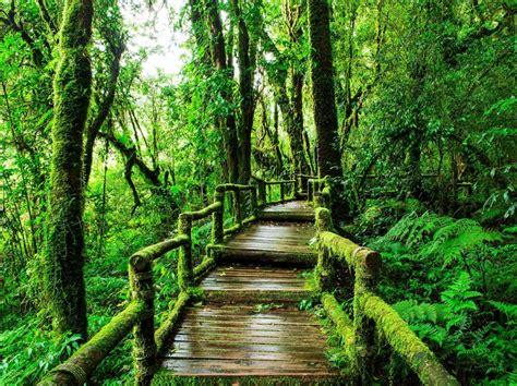 thailand park most forest nature doi inthanon parks national path ang ka trail mae hong loop son rain natural fun