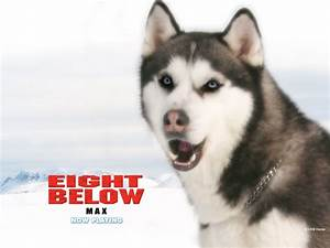 switch2life: Eight Below