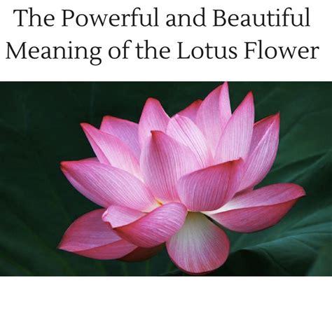 powerful  beautiful meaning   lotus flower