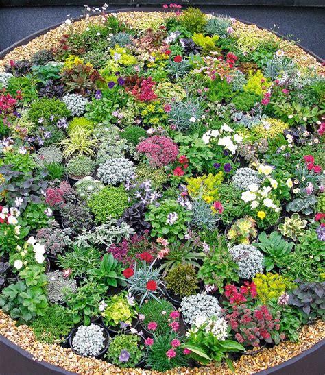Winterharte Blumen Für Kübel by Steingarten Stauden Mix Garden