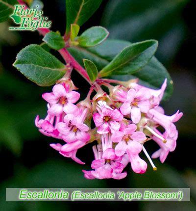 fiori nome come si chiama diamo un nome a fiori e piante 3 fiori