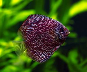 Golden Eye View: Top 15 Most Beautiful Fishes of the World ...