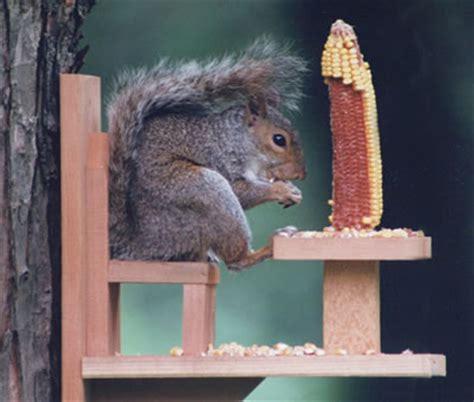 duncraft duncraft 570 squirrel chair feeder
