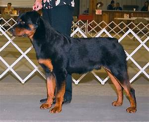 Rottweiler puppies 4 months female – Merry Dog Life photo blog