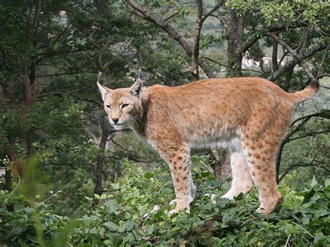 testo zoo de roma parco nazionale d abruzzo lazio e molise galleria