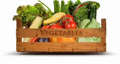 Vegetables Market Farmers Local Produce Ocala Party