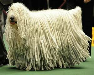 10 Of The Largest Dog Breeds In The World - Page 3 of 5