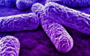 Microorganisms  U2013 Science Matters