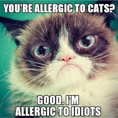 Annoyed Cat Meme - 20 laughable angry cat meme sayingimages com