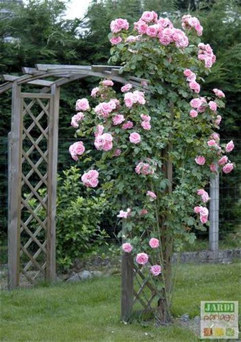 l entretien des rosiers en hiver jardipartage