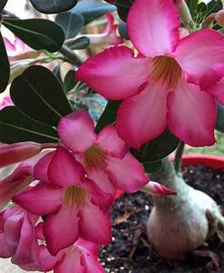 identification - What is the name of this pink flower wirh ...