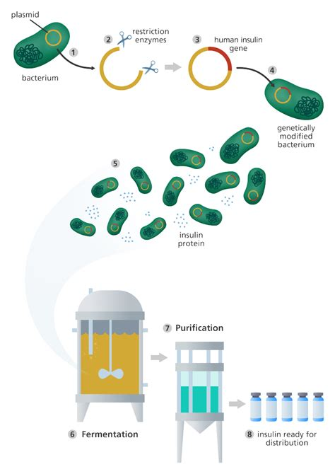 Modification To Dna by What Is Genetic Engineering Science Molecular Biology