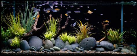 top 4 facebook groups you should join if you are a fish