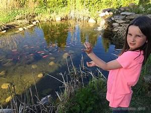 Nourriture Poisson Bassin : bassin de jardin poissons et carpes ko s au jardin d 39 eau ~ Melissatoandfro.com Idées de Décoration