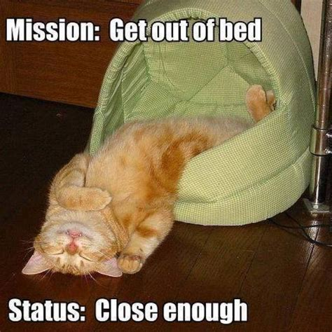 Get Out Of Bed Meme - get out of bed cat meme