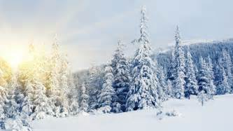 winter snow covered trees wallpapers and images wallpapers pictures photos