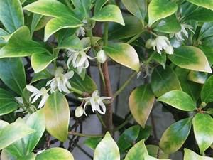Zitruspflanzen Gelbe Blätter : gelbe bl tter an zitronen ein zeichen von eisenmangel plantura ~ Orissabook.com Haus und Dekorationen