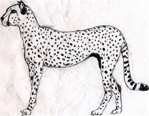 lade bambini disney ghepardo disegno per bambini disegno di leopardo