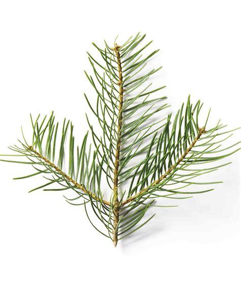 christmas tree smells like citrus a tree glossary martha stewart