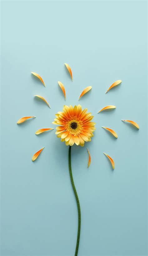 foto bunga tumblr vina gambar
