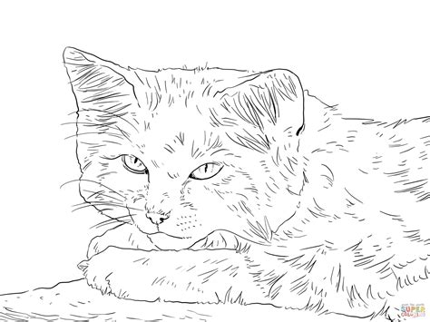 real cat coloring pages  getcoloringscom  printable colorings pages  print  color