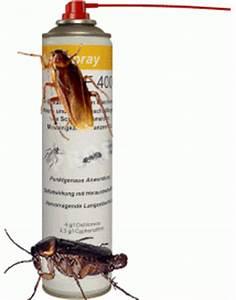 Gift Für Wespen : kakerlaken bek mpfung spray k che b ckerei cyphenothrin d tetramethrin fliegen motten ~ Whattoseeinmadrid.com Haus und Dekorationen
