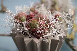 übertöpfe Selber Machen : diy beton bert pfe selber gie en oder sempervivum im spitzenr ckchen ~ Frokenaadalensverden.com Haus und Dekorationen