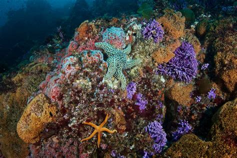 fantastic farnsworth diving   side  catalina