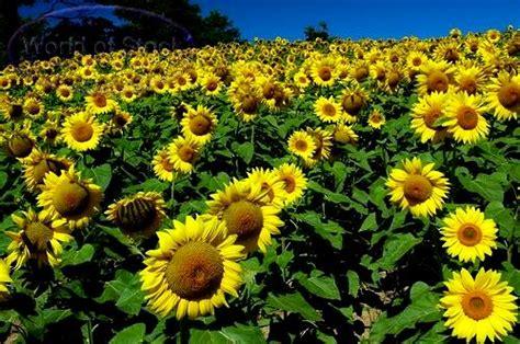 tanaman obat tanaman berkhasiat ramuan tradisional