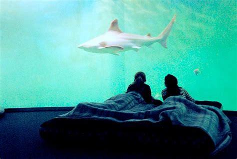aquarium aix en provence grand aquarium de malo dormir au milieu des requins