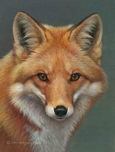 Red Fox Face Graphics, Pictures, & Images for Myspace ...