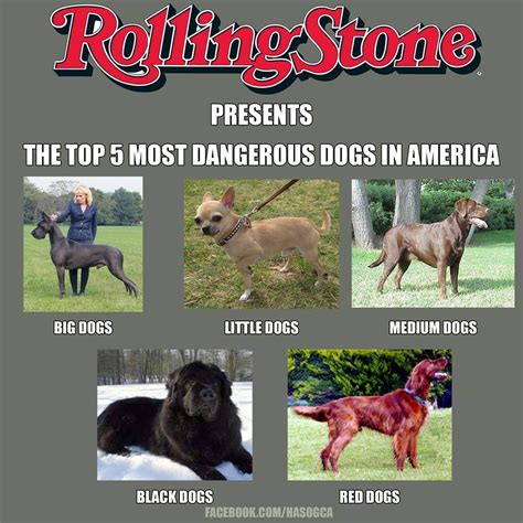 Top 5 Most Dangerous Dogs In America