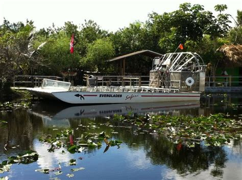 Airboat Nz by Gator Right Next To Us Picture Of Everglades Safari