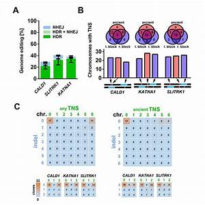 Multiplexed Precise Genome Editing Of Cald1  Katna1  And
