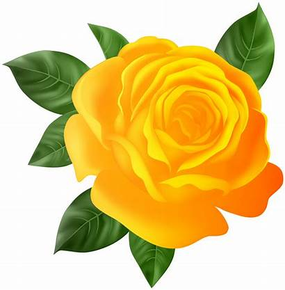 Orange Transparent Rose Clip Roses Clipart Yopriceville
