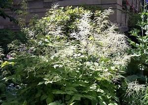 Pflanzen Für Trockene Schattige Standorte : geh lze f r schatten inklusive bl tengeh lze ~ Michelbontemps.com Haus und Dekorationen