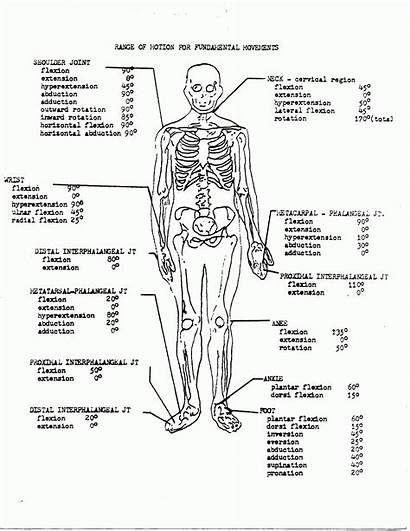 Anatomy Physiology Coloring Pages Printable Workbook Answers