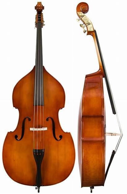 Bass Double Upright Basses Orchestra Instruments Transparent