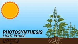 Photosynthesis Light Stage